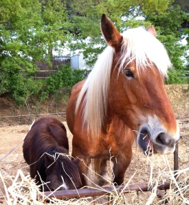 Tulip and Stella the pony.