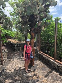 Cactus trees!